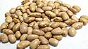 Italina Beans
